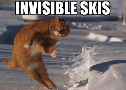 cat-funny-meme-invisible-skis