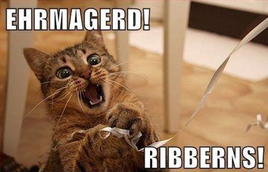 caturday_cat_memes_04